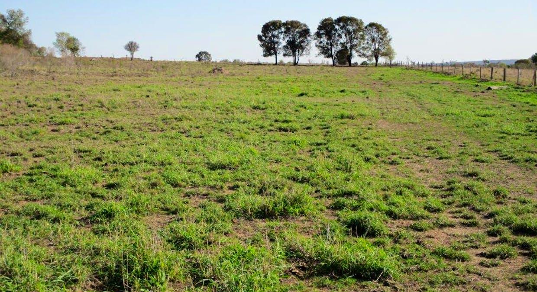 602 Acres Grazing, Jandowae, QLD, 4410 - Image 12