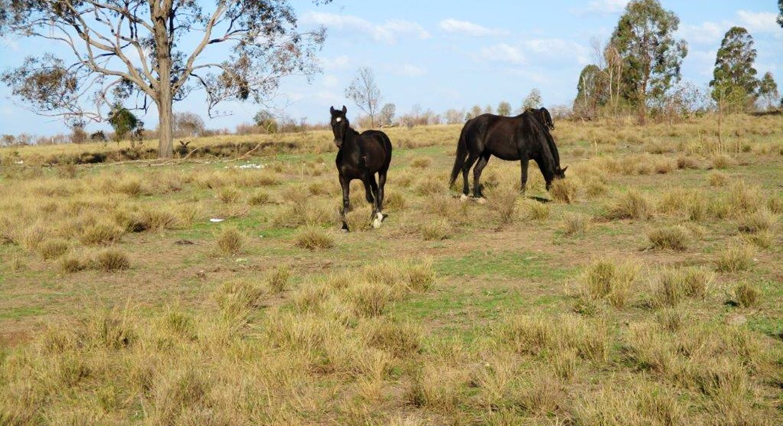 602 Acres Grazing, Jandowae, QLD, 4410 - Image 4