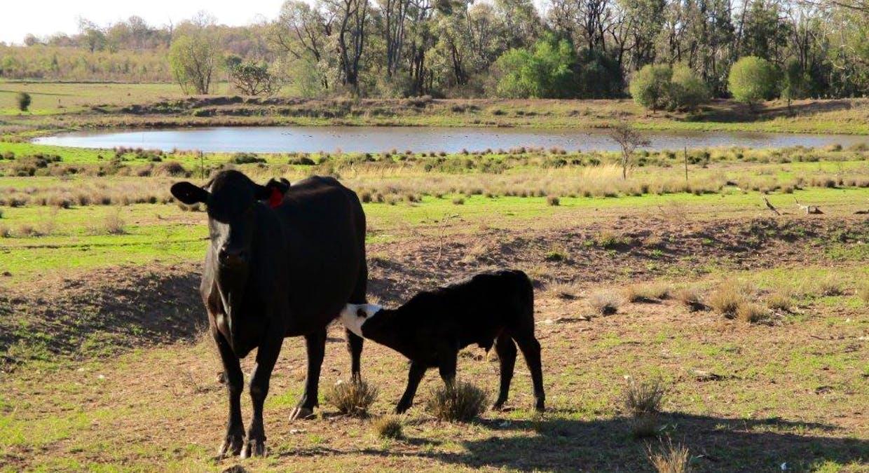 602 Acres Grazing, Jandowae, QLD, 4410 - Image 13