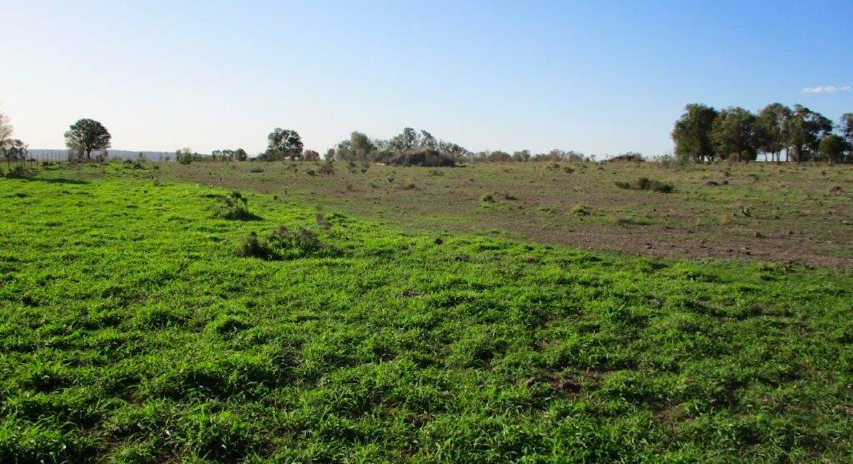 602 Acres Grazing, Jandowae, QLD, 4410 - Image 16