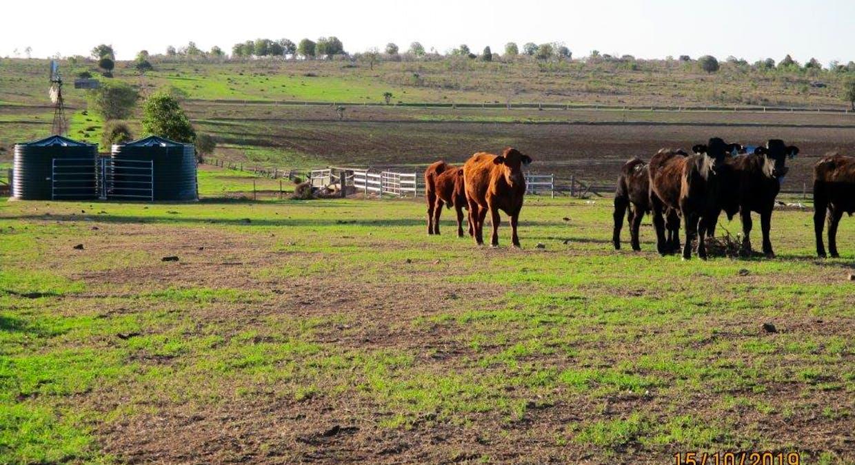 602 Acres Grazing, Jandowae, QLD, 4410 - Image 5