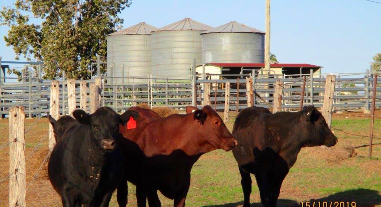 602 Acres Grazing, Jandowae, QLD, 4410 - Image 2