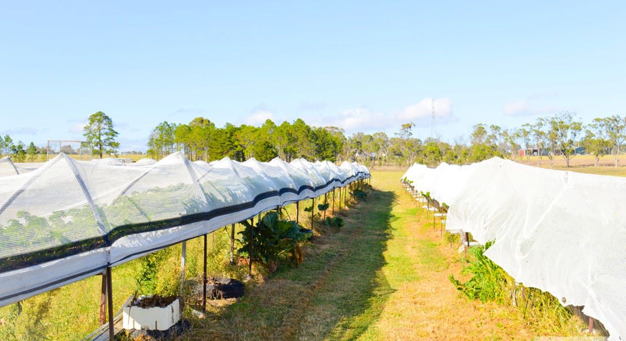 Lot 300 Cunningham Highway, Womina, QLD, 4370 - Image 4