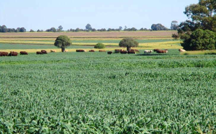 2463 Acres Cattle And Cultivation, Jandowae, QLD, 4410 - Image 1