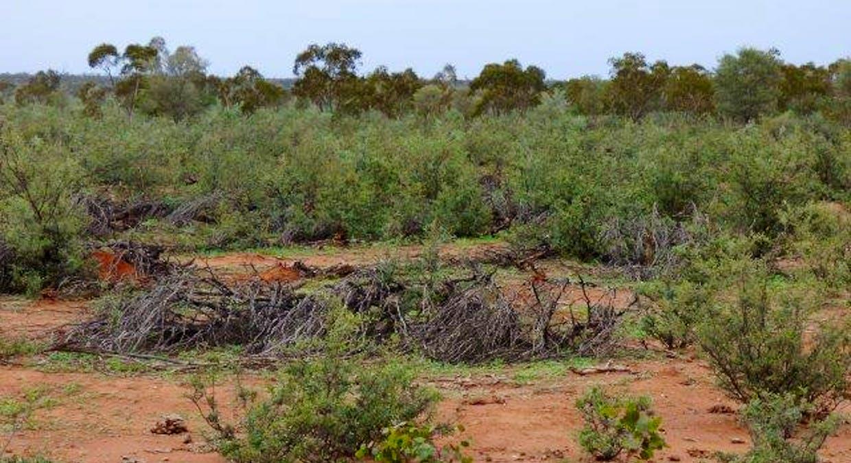 Charleville, QLD, 4470 - Image 21