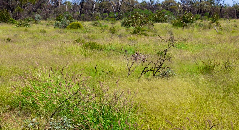 Charleville, QLD, 4470 - Image 10