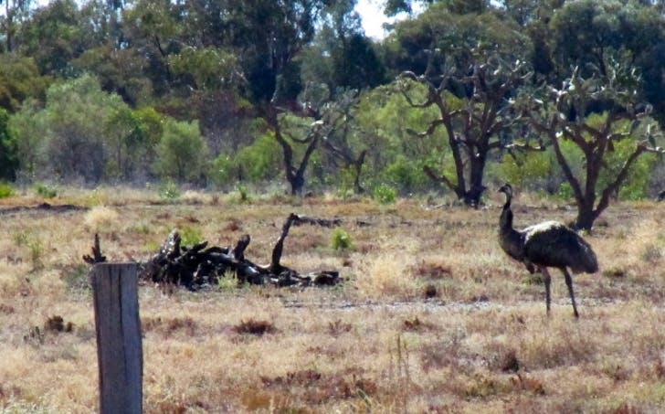 LOT 29 Gazzards Road, Tara, QLD, 4421 - Image 1