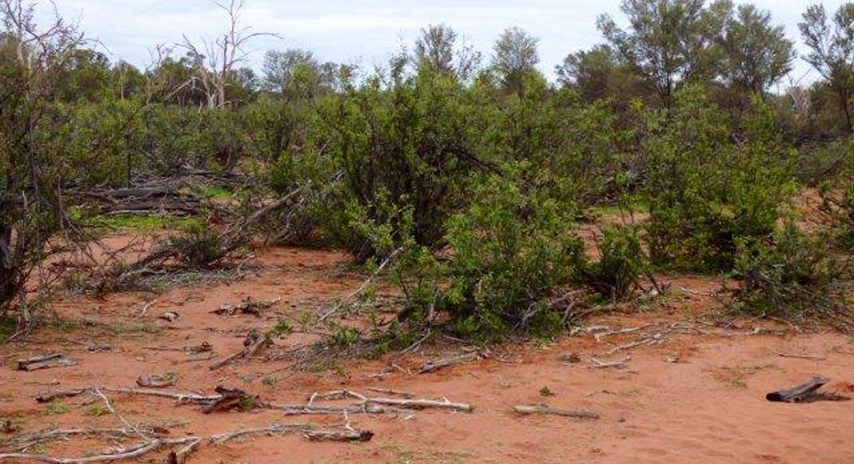 Charleville, QLD, 4470 - Image 18