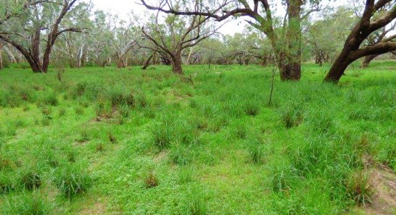 Charleville, QLD, 4470 - Image 13