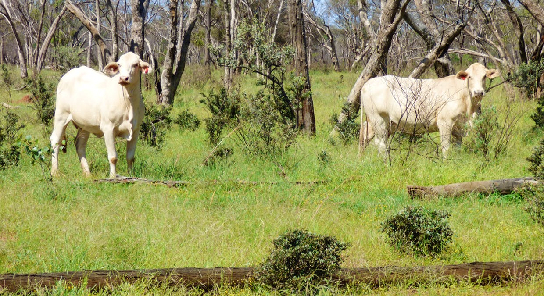 Charleville, QLD, 4470 - Image 23