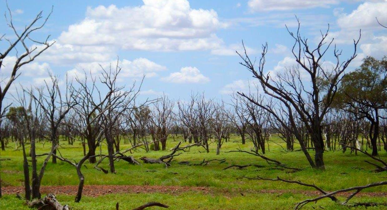 Cunnamulla, QLD, 4490 - Image 10