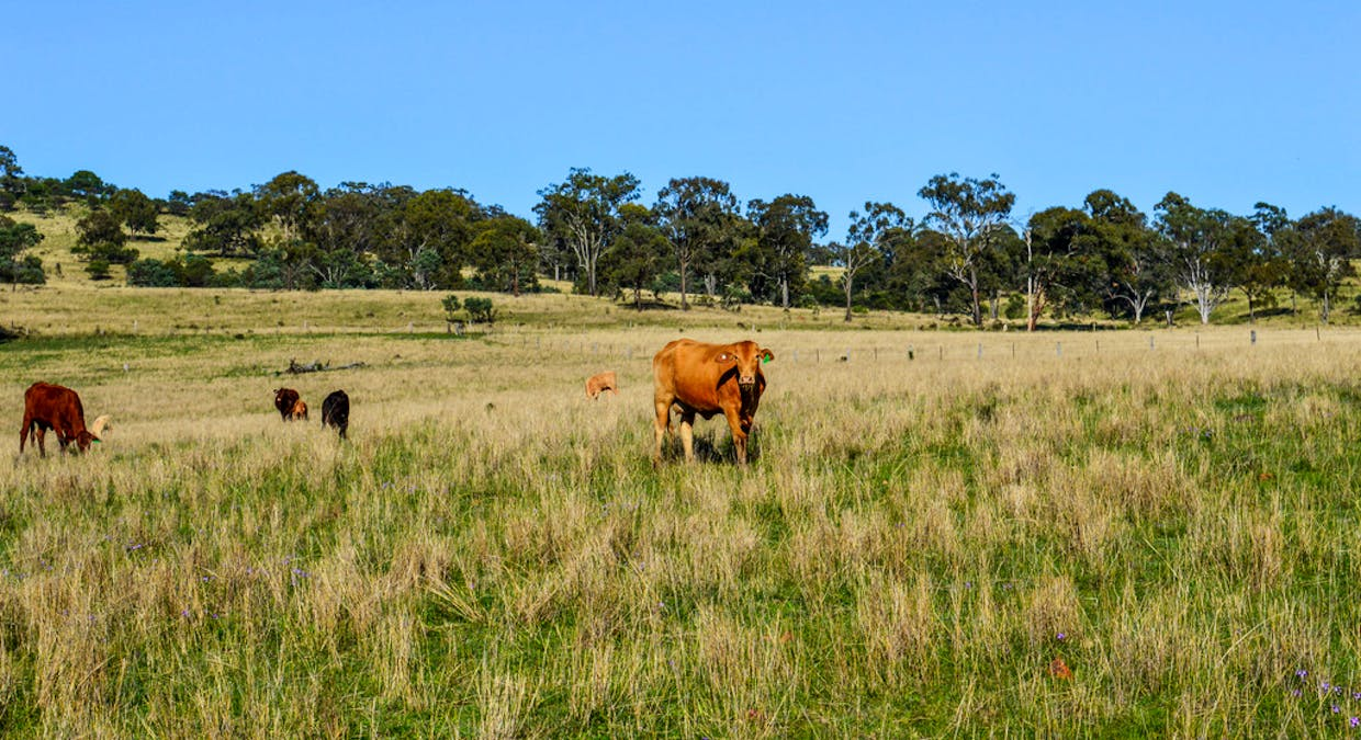 72 Connolly Dam Road, Silverwood, QLD, 4370 - Image 2