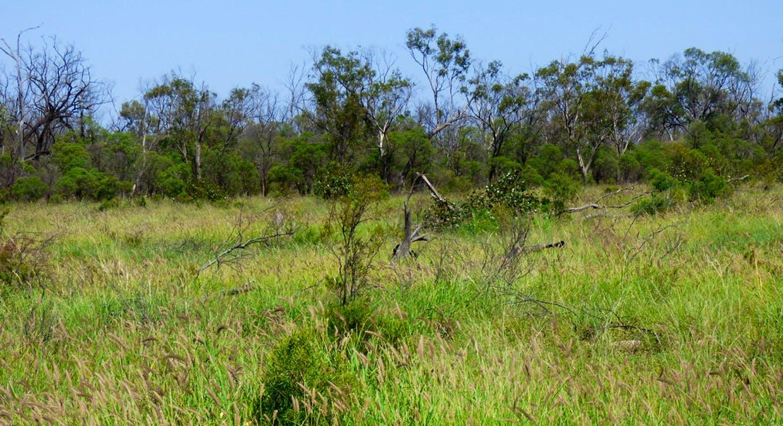 Charleville, QLD, 4470 - Image 4
