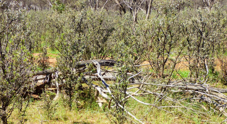 Charleville, QLD, 4470 - Image 31