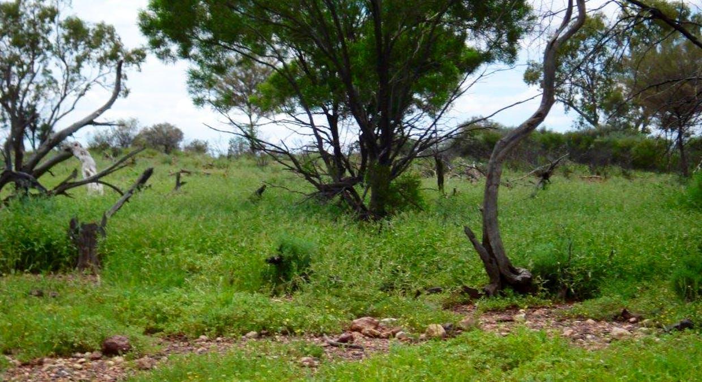 Cunnamulla, QLD, 4490 - Image 3