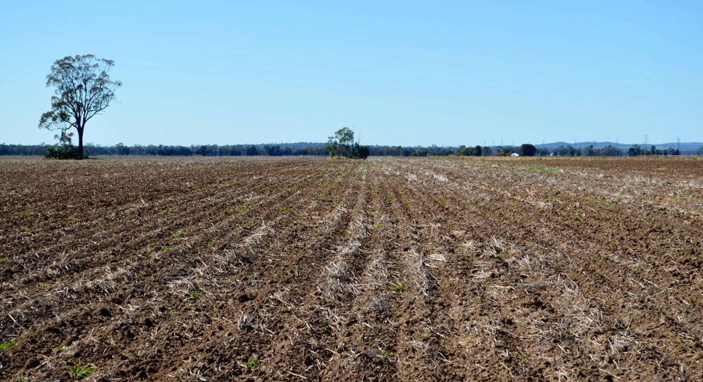 Campbells Road, Punchs Creek, QLD, 4357 - Image 11