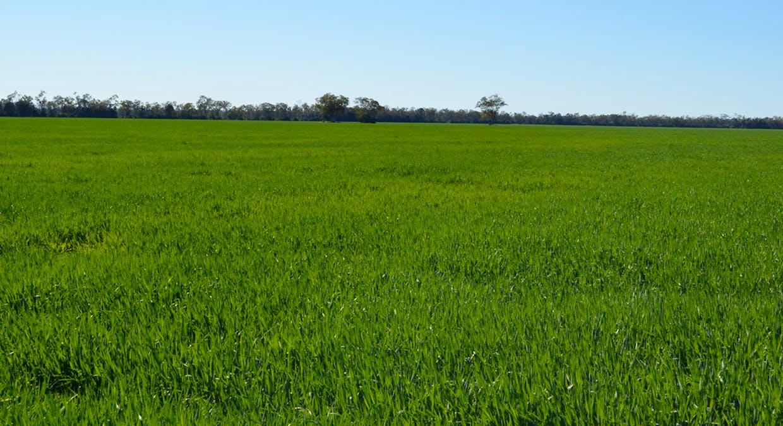 Campbells Road, Punchs Creek, QLD, 4357 - Image 3