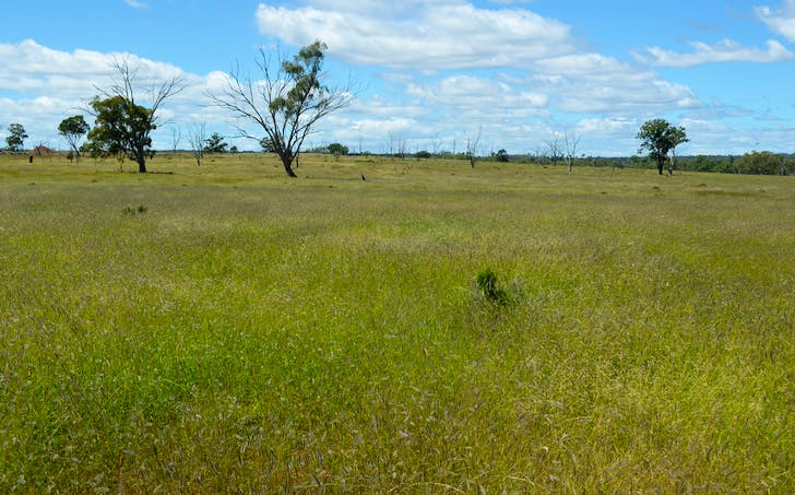 Mosquito Creek Road, Mosquito Creek, QLD, 4387 - Image 1