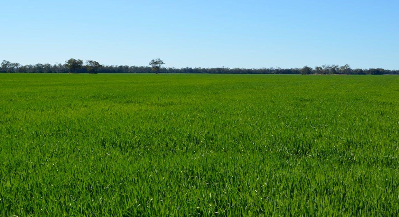 Campbells Road, Punchs Creek, QLD, 4357 - Image 7