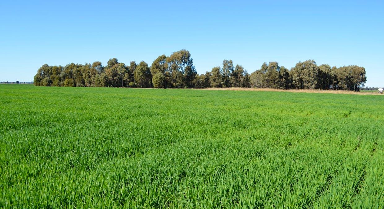 Campbells Road, Punchs Creek, QLD, 4357 - Image 8