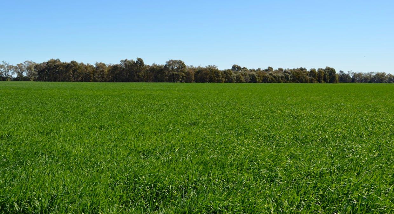 Campbells Road, Punchs Creek, QLD, 4357 - Image 10