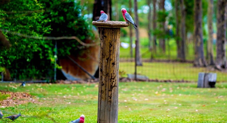 6430 Bucketts Way, Tinonee, NSW, 2430 - Image 19