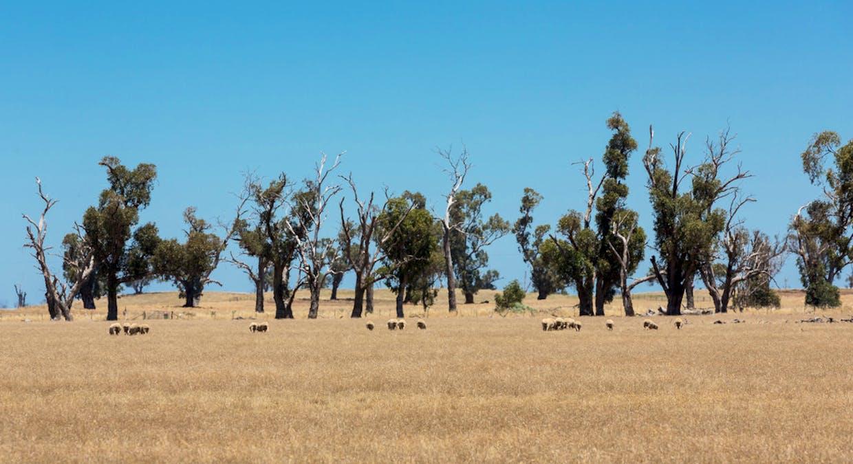 2899 Spring Drive, Mulwala, NSW, 2647 - Image 26