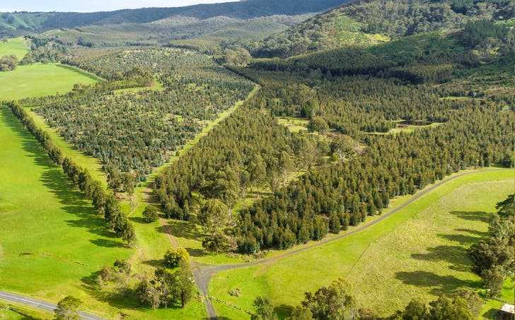 910 King Parrot Creek Road, Strath Creek, VIC, 3658 - Image 1