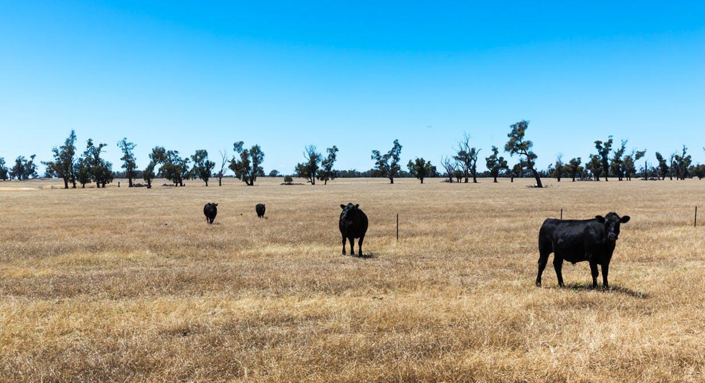 2899 Spring Drive, Mulwala, NSW, 2647 - Image 25