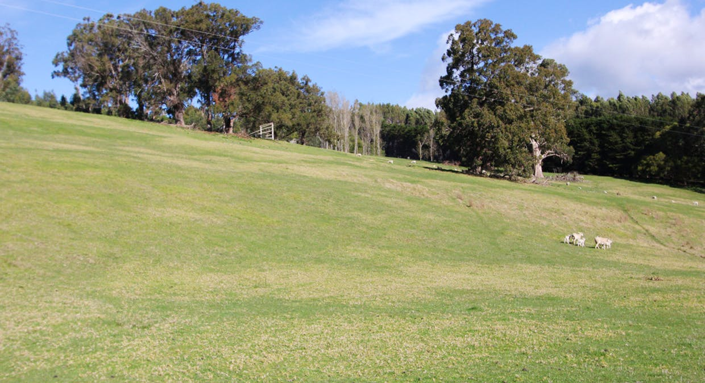 1435 Tarra Valley Road, Tarra Valley, VIC, 3971 - Image 15
