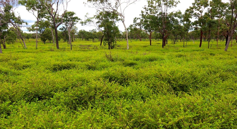 106 Edith Farms Rd, Katherine, NT, 0850 - Image 4