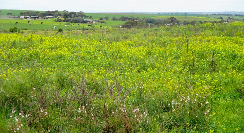 135 Martin Road, Wall Flat, SA, 5254 - Image 12
