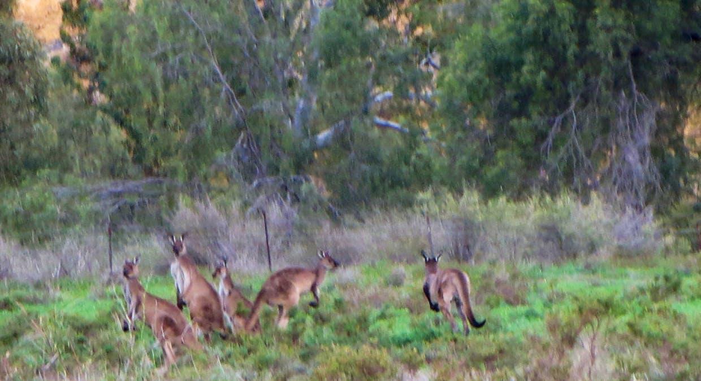 1 Manunka Road, Forster, SA, 5238 - Image 9