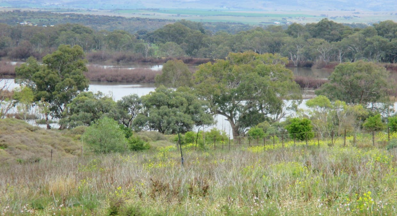 135 Martin Road, Wall Flat, SA, 5254 - Image 2
