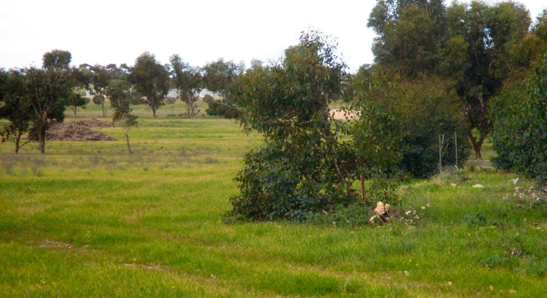 36 Magpie Drive, Tailem Bend, SA, 5260 - Image 3