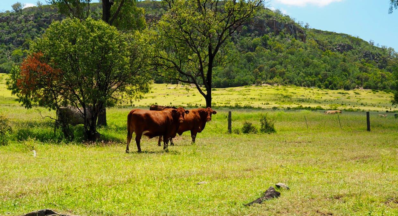 8533 Fitzroy Development Rd, Bauhinia, QLD, 4718 – For Sale | Elders