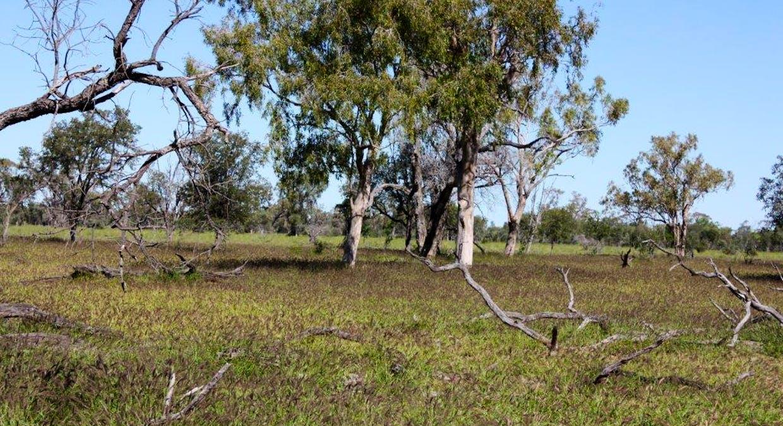 Blackall, QLD, 4472 - Image 5