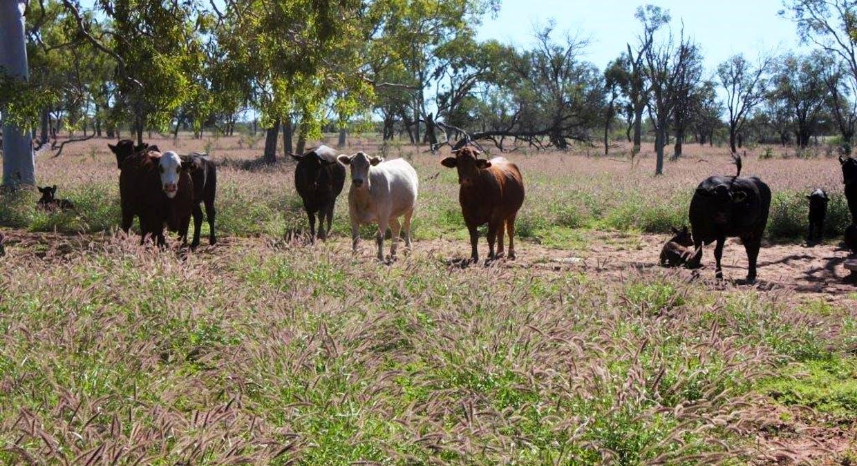 Blackall, QLD, 4472 - Image 1