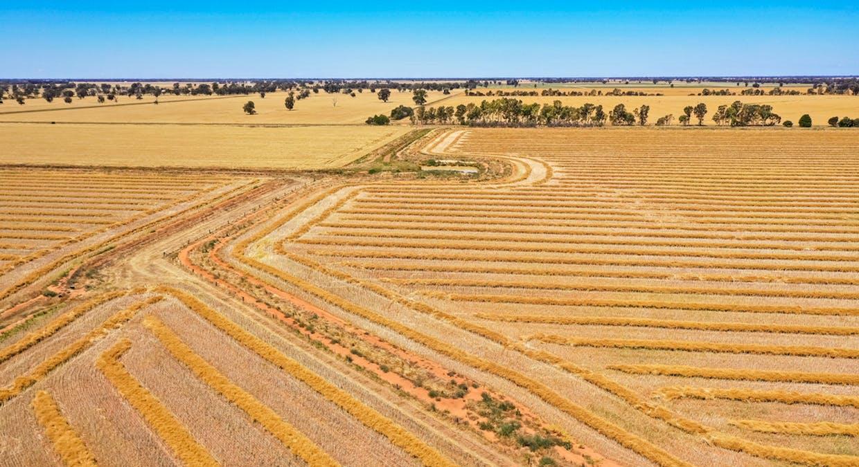 623 Logie Brae Road, Finley, NSW, 2713 - Image 5