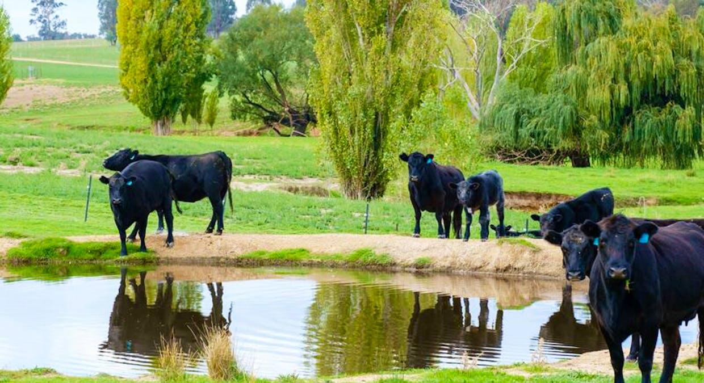 Aberfeldy Hume Highway, Holbrook, NSW, 2644 - Image 23