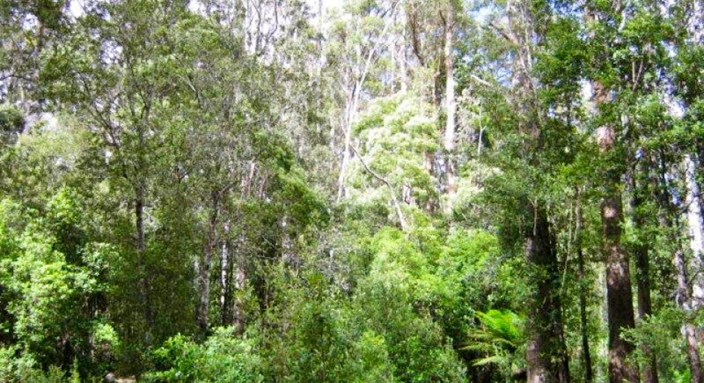 691A Brown Mountain Road, Karoola, TAS, 7267 - Image 12