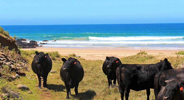 'Sheepies' Coolawang Beach Rd, Waitpinga, SA, 5211 - Image 15