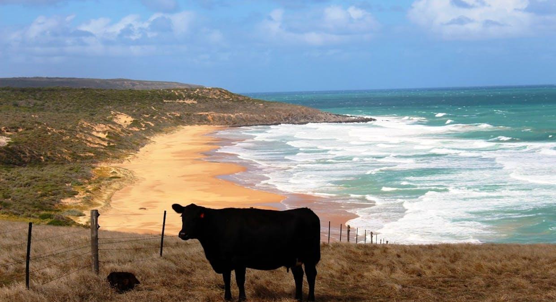 'Sheepies' Coolawang Beach Rd, Waitpinga, SA, 5211 - Image 18