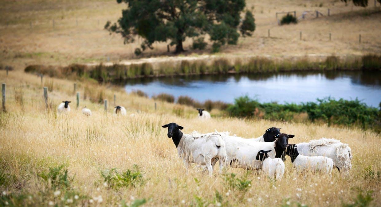 51 Mcewin Rd (Via Sawpit Rd), Hindmarsh Valley, SA, 5211 - Image 2