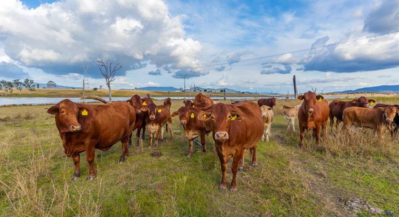 4330 Esk Kilcoy Road, Hazeldean, QLD, 4515 - Image 4