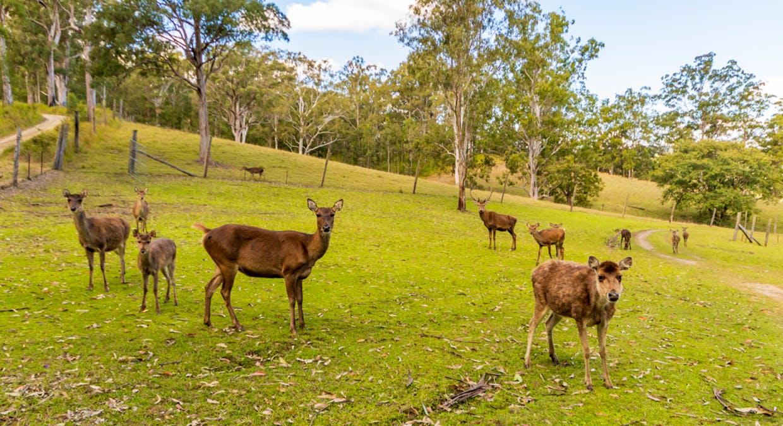 391 Goodla Road, Sandy Creek, QLD, 4515 - Image 10