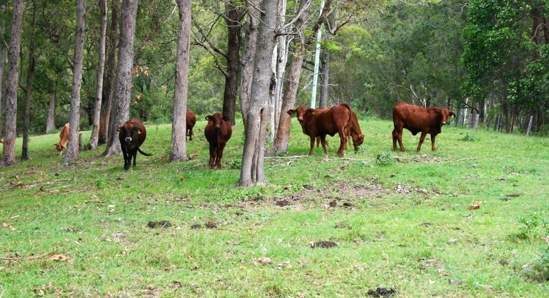 489 Mount Mee Road, Delaneys Creek, QLD, 4514 - Image 2
