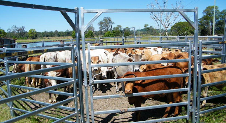 930 Cove Road, Commissioners Flat, QLD, 4514 - Image 19