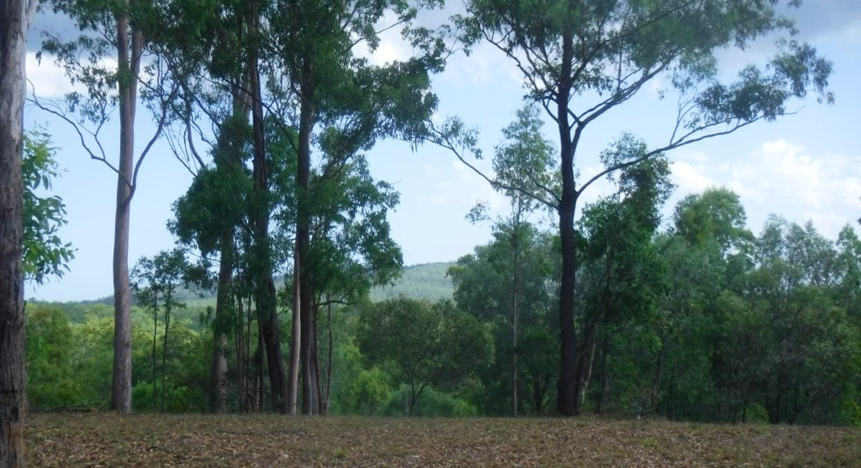 Lot 379 Arborten Road, Glenwood, QLD, 4570 - Image 17