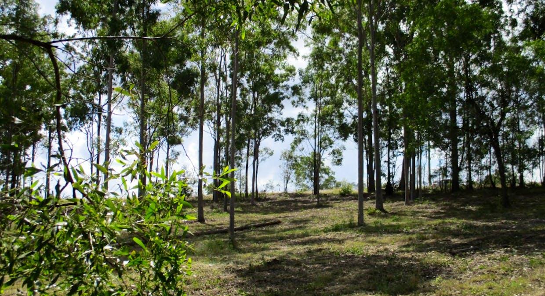 Lot 221 Beckmanns Road, Glenwood, QLD, 4570 - Image 15